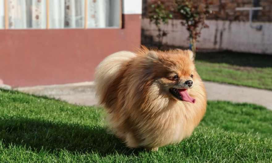 Dog That Sheds