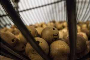 Can I Effectively Predict Lottery Numbers